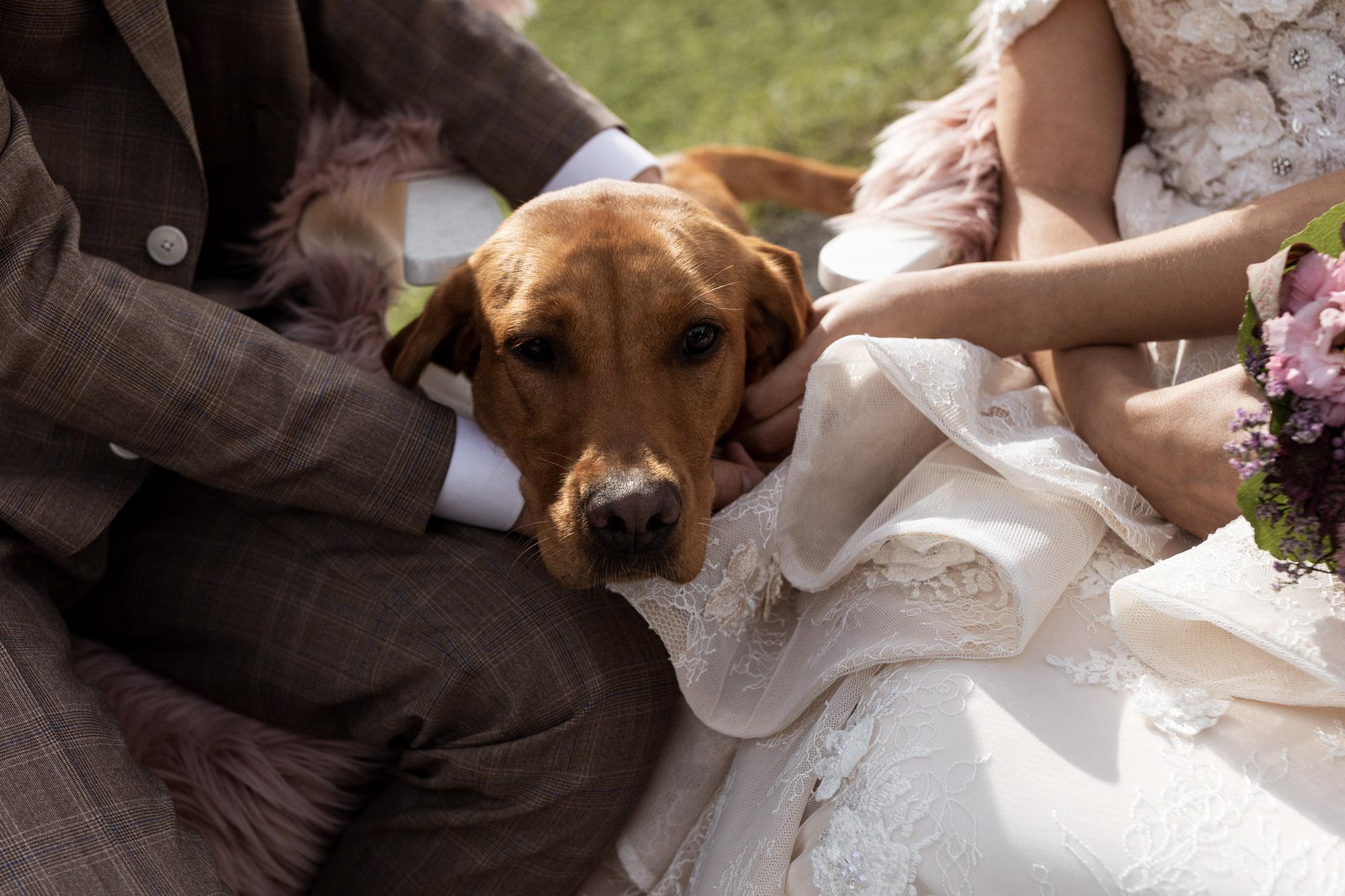 Der süsse Hund vom Brautpaar - Berghochzeit