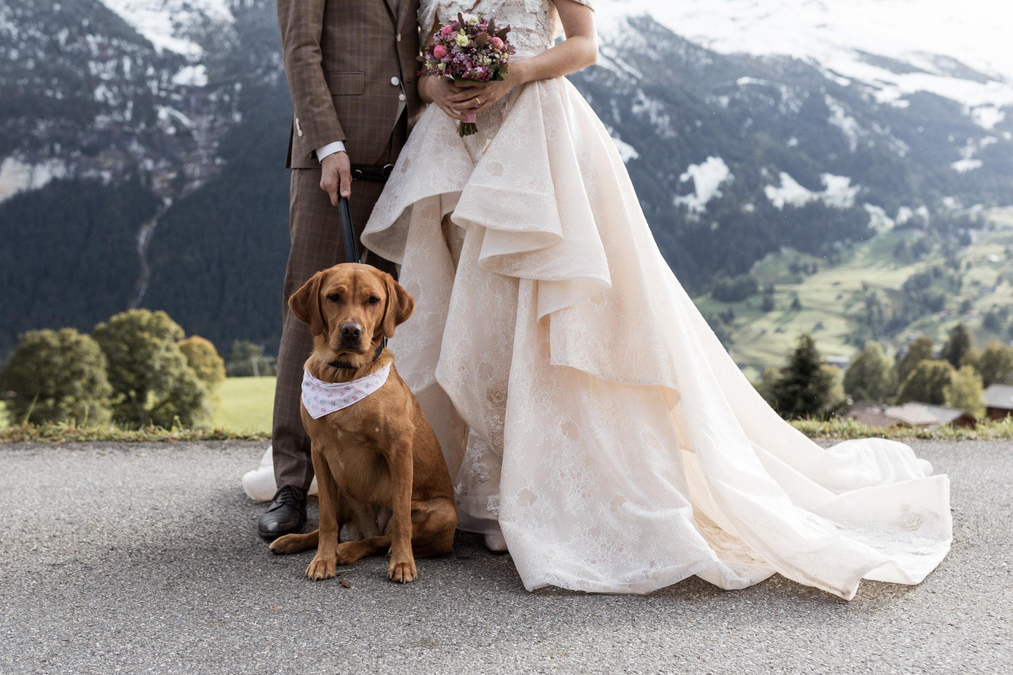 Der süsse Hund des Brautpaares - Hochzeitsfotograf