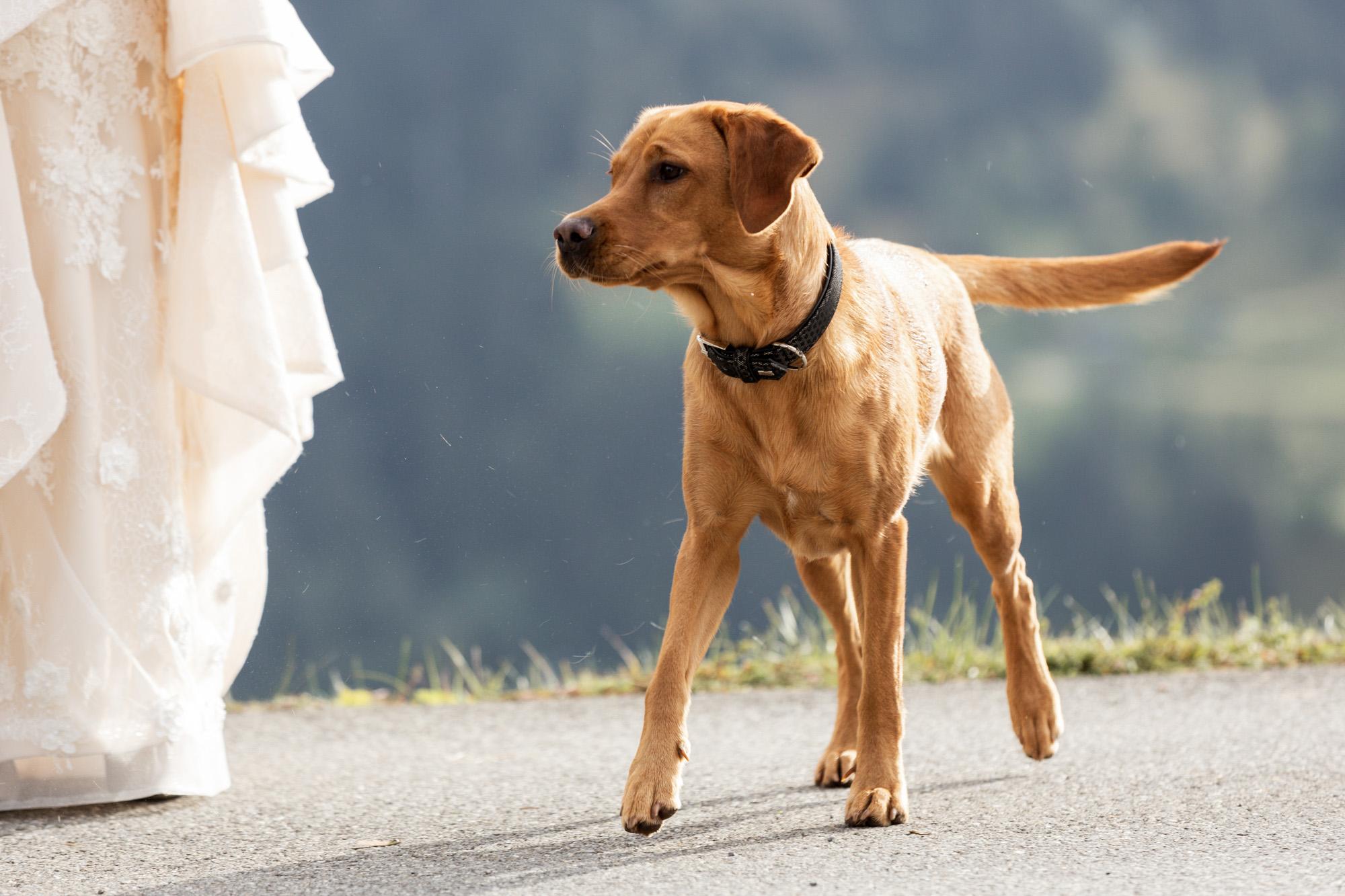 Der Hund des Brautpaares - Hochzeit - Hochzeitsfotograf Basel